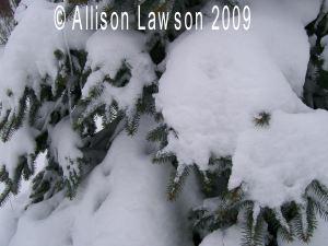 snowinthetree